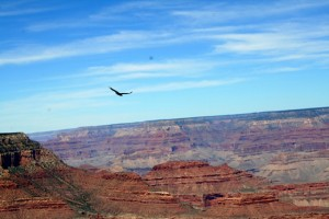 The Grandest Canyon